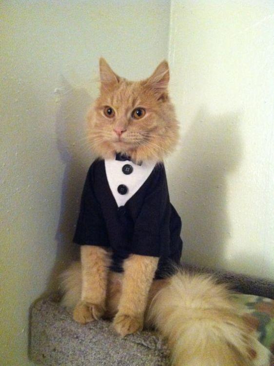 CatTux.jpg